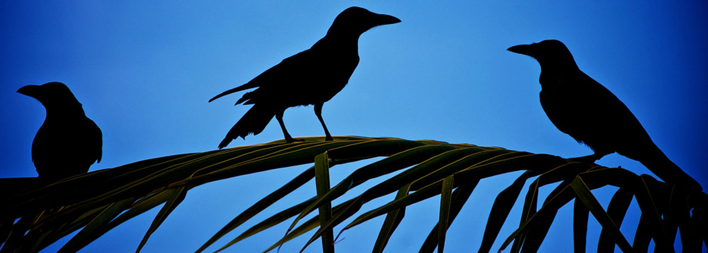 How the Cuckoo and the Crow Explain the Entrepreneurship Ecosystem