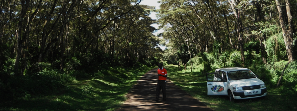 Renewable Energy is Growing on the Trees in Africa