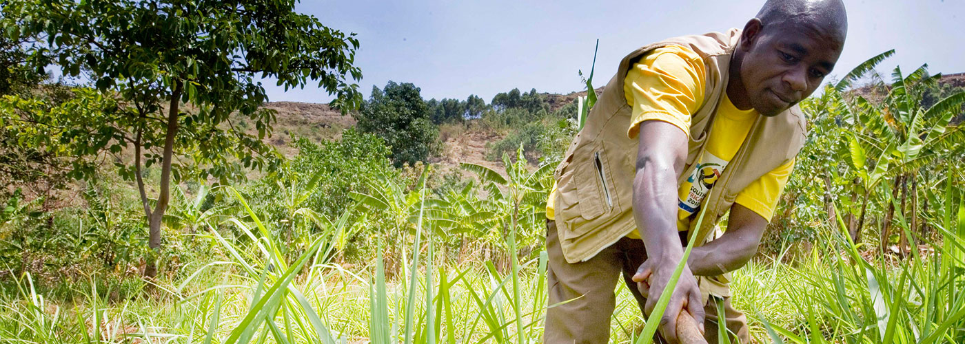 Energizing the Green Revolution in Africa