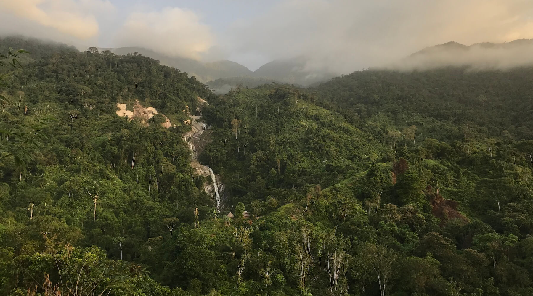 Colombia's Forests Left Vulnerable in the Wake of Civil War